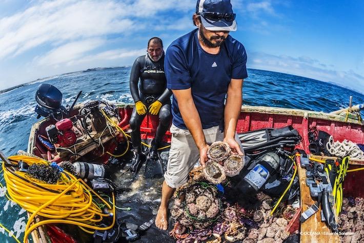 Pescadores artesanales recogiendo la producción de locos de una de las pesquerías cercanas al proyecto Dominga | Oceana – Eduardo Sorensen