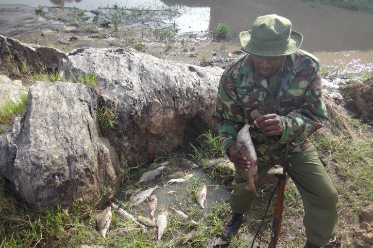 Peces muertos en el río Mara en Kenia | Imagen de Christopher Dutton