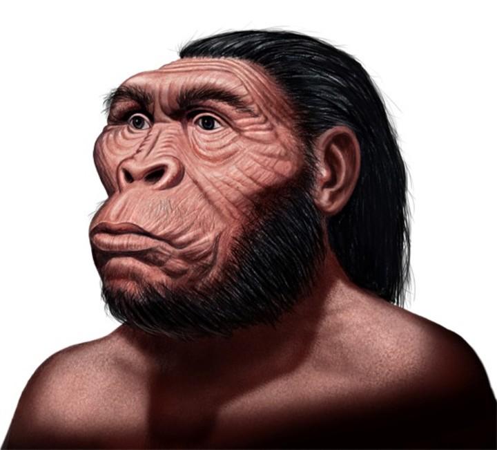 Australopithecus anamensis | Ilustración de Néstor Canavarro
