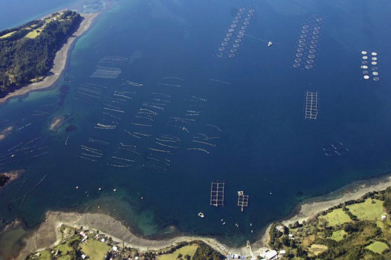 Salmoneras en fiordos patagónicos, Chile   Foto: Vreni Häussermann