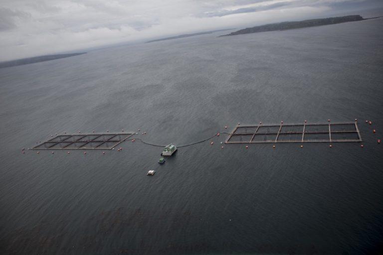 Jaulas de Salmones en Chile. Foto: Daniel Casado.