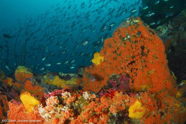 Fondo marino sector La Higuera. Foto: Oceana – Eduardo Sorensen.