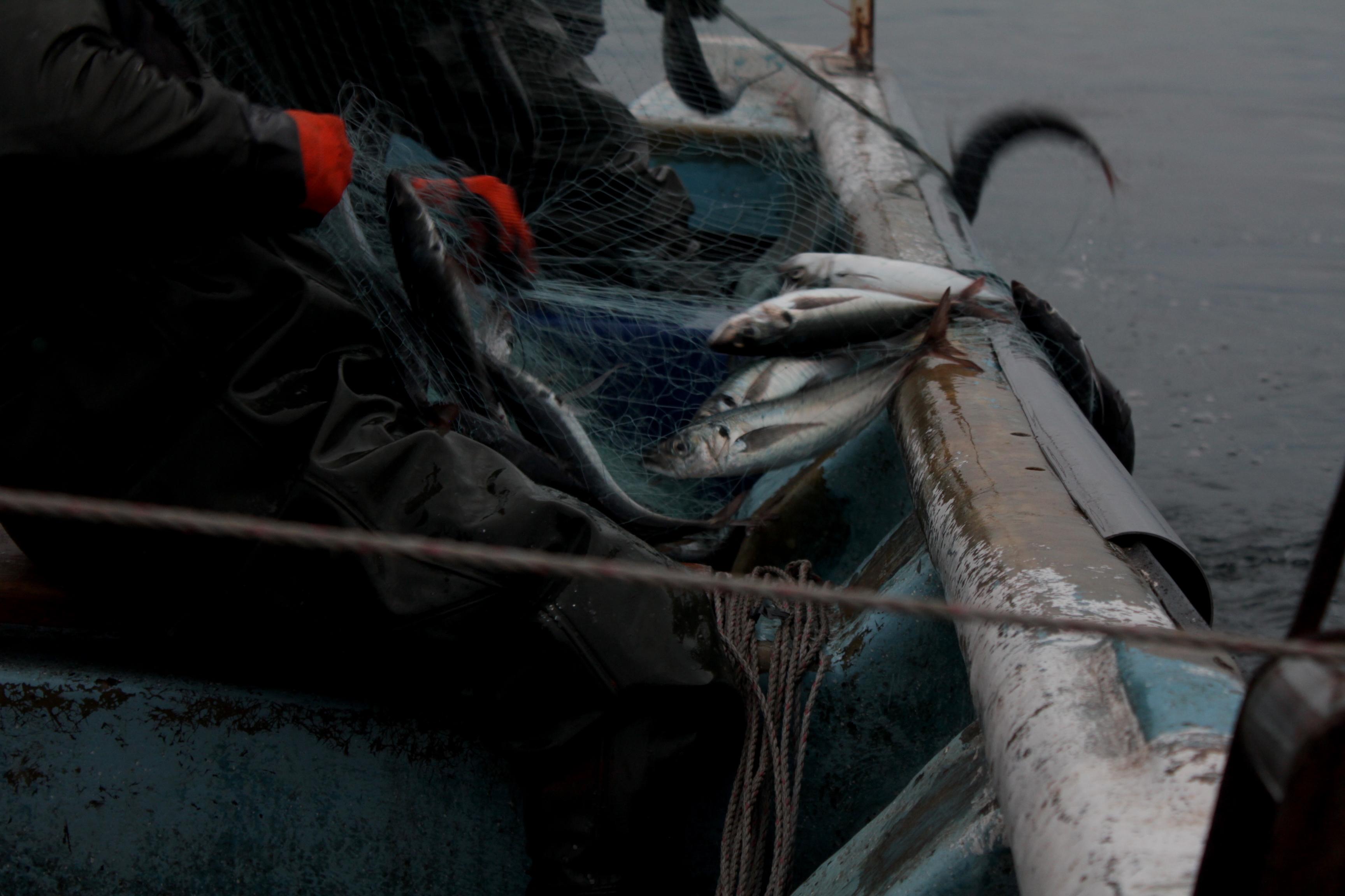 Pescadores artesanales pescando merluza. Foto: Michelle Carrere