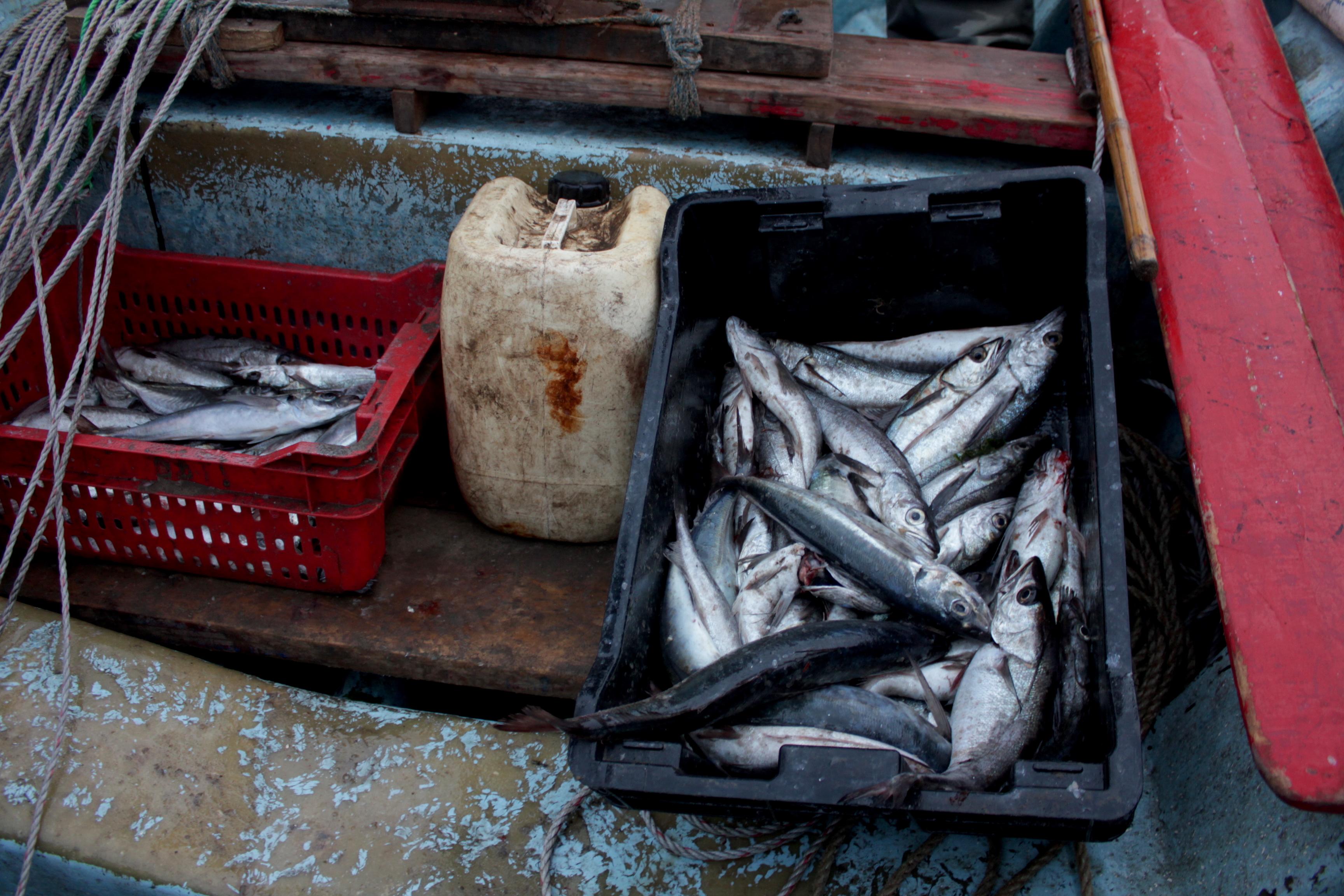 Pescadores artesanales pescando merluza. El 70% del recurso disponible es juvenil. Foto: Michelle Carrere