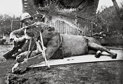 Paterson exhibe uno de los leones muertos | Archivo