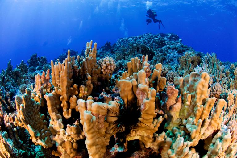 La administración de la nueva área protegida estará a cargo de un consejo directivo compuesto por seis representantes del pueblo Rapa Nui y cinco del gobierno chileno   Gobernación Isla de Pascua.