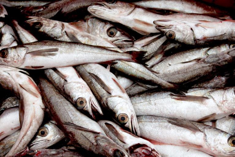 Pescadores artesanales pescando merluza. El 70 % del recurso que está disponible es juvenil. | Foto: Michelle Carrere