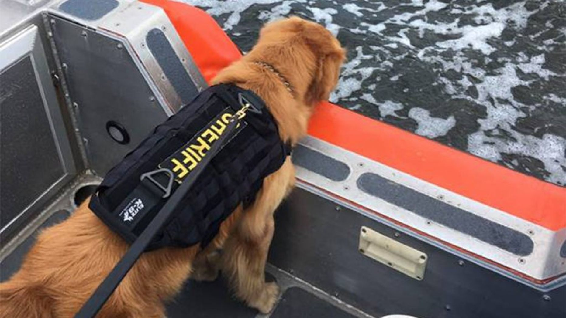 El perro Jake | Fox News