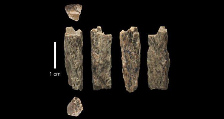 Restos fósiles de Denny, la hija del cruce entre una Neandertal y un Denisovano.