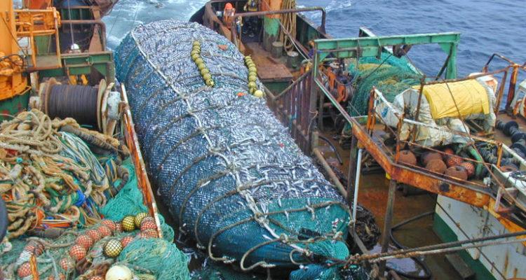 Dentro de los compromisos asumidos por Chile en la última conferencia mundial Our Ocean 2018, realizada en Bali en octubre pasado, está concretar el congelamiento de la huella de arrastre de fondo antes de fin de año. Foto: Oceana-Mauricio Altamirano