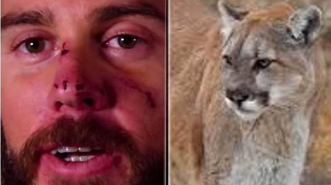 Lo asfixió con una llave: la increíble historia del 'runner' que mató a un puma en Estados Unidos