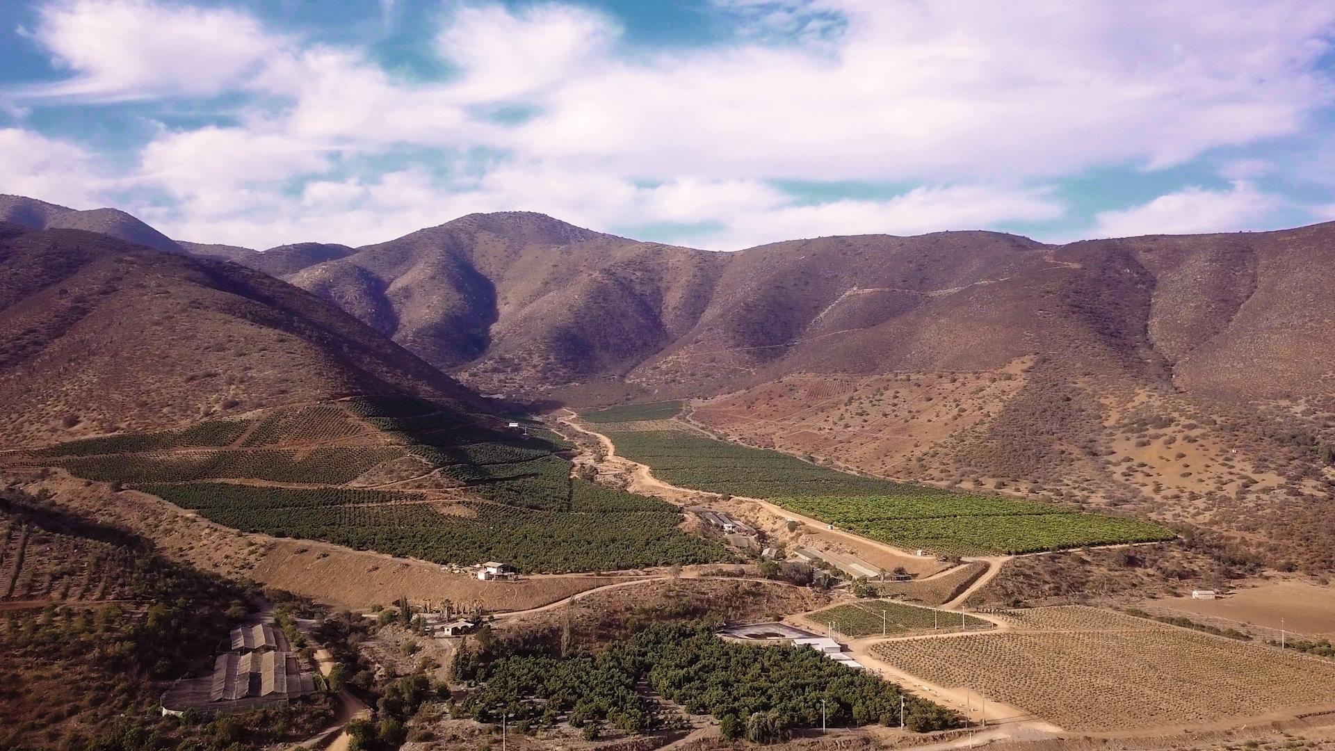 Plantación de paltos  en Petorca | Priscila Toro | BioBioChile