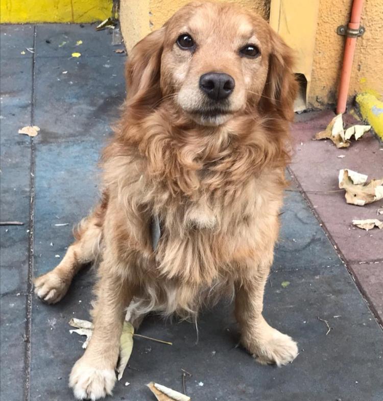 Súper Lunes, el perrito rescatado del Metro