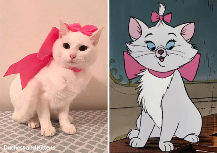 Marie | Duchess And Kittens