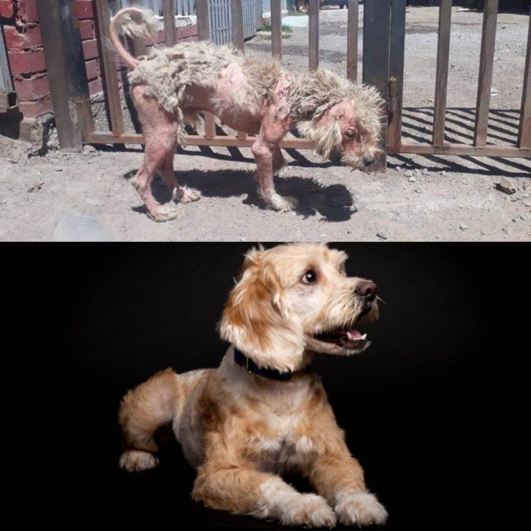 Salvador antes y después | Adopciones David Fernández