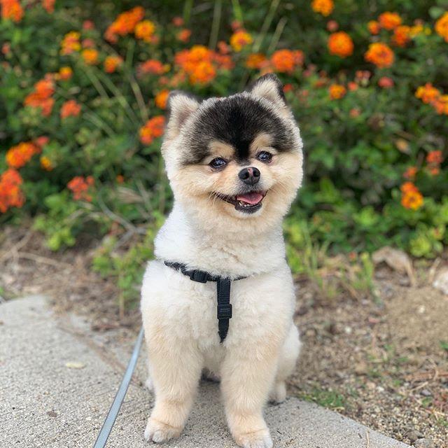 Daniel Sturrdige ofrece 33.000 euros a quien encuentre a su perro