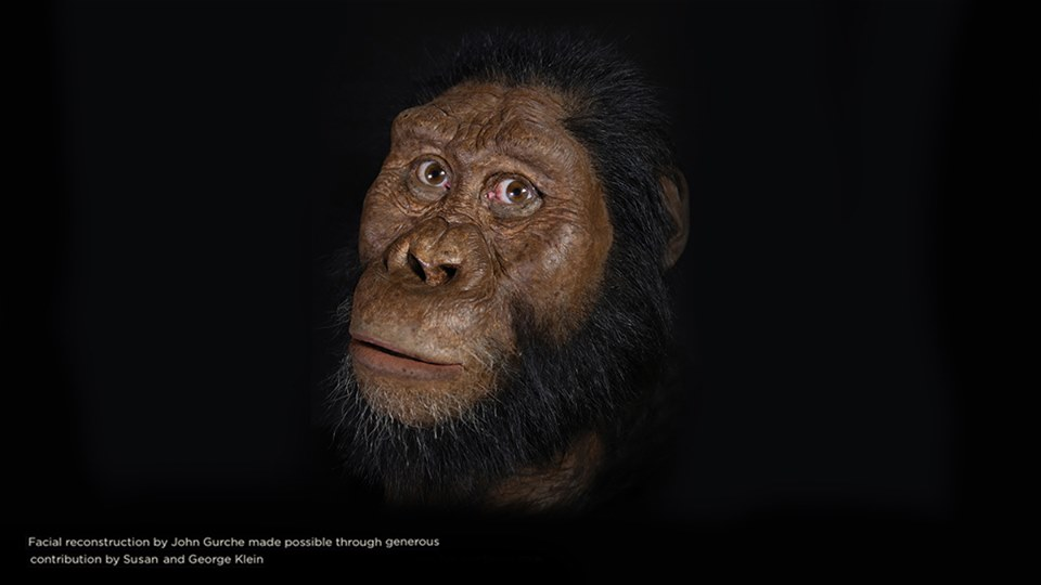 Australopithecus anamensis | Cleveland Museum of Natural History