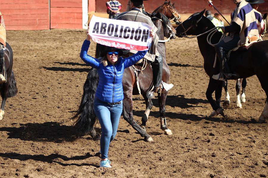 Animal Libre | Agencia Uno