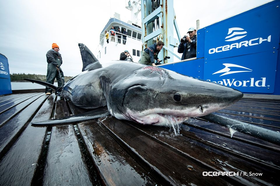 Vimy | Ocearch