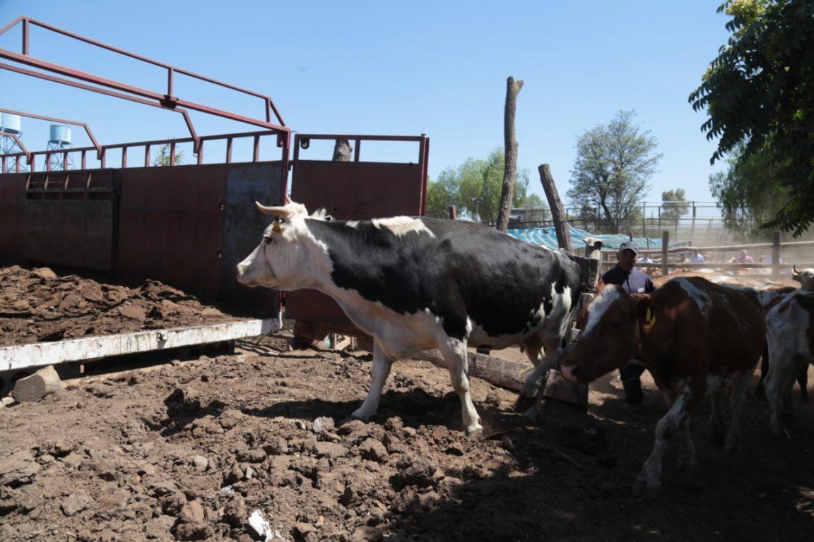 Seremi de Agricultura Araucanía