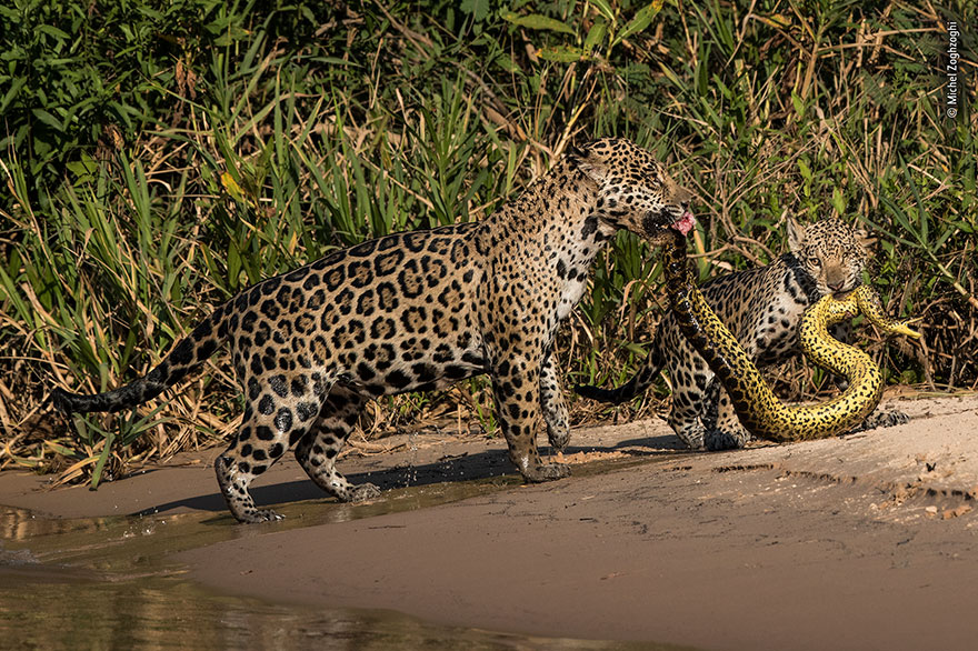 """Michel Zoghzoghi, """"Matching Outfits"""" 