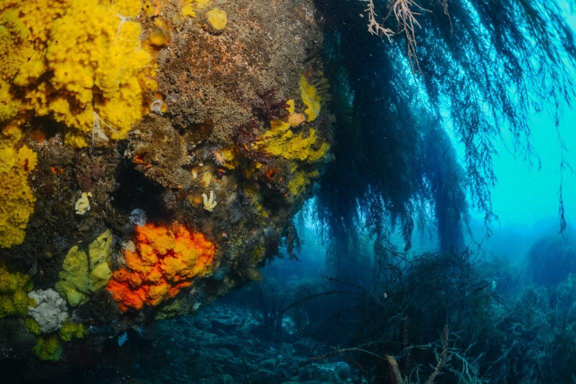 Las profundidades del Océano Austral esconden una biodiversidad, hasta ahora, desconocida
