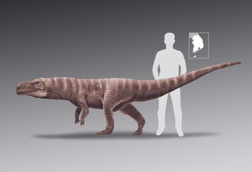Tamaño del cocodrilo comparado con el de un humano | Anthony Romilio