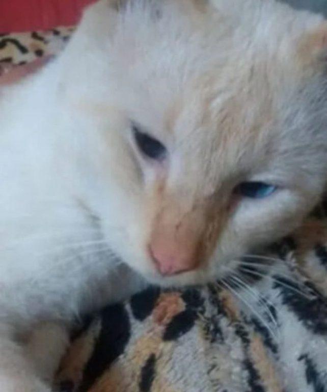 Una de las mascotas que falleció ese día