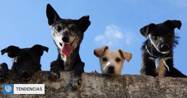 Día del Perro: 6 beneficios que entregan estas mascotas para ...