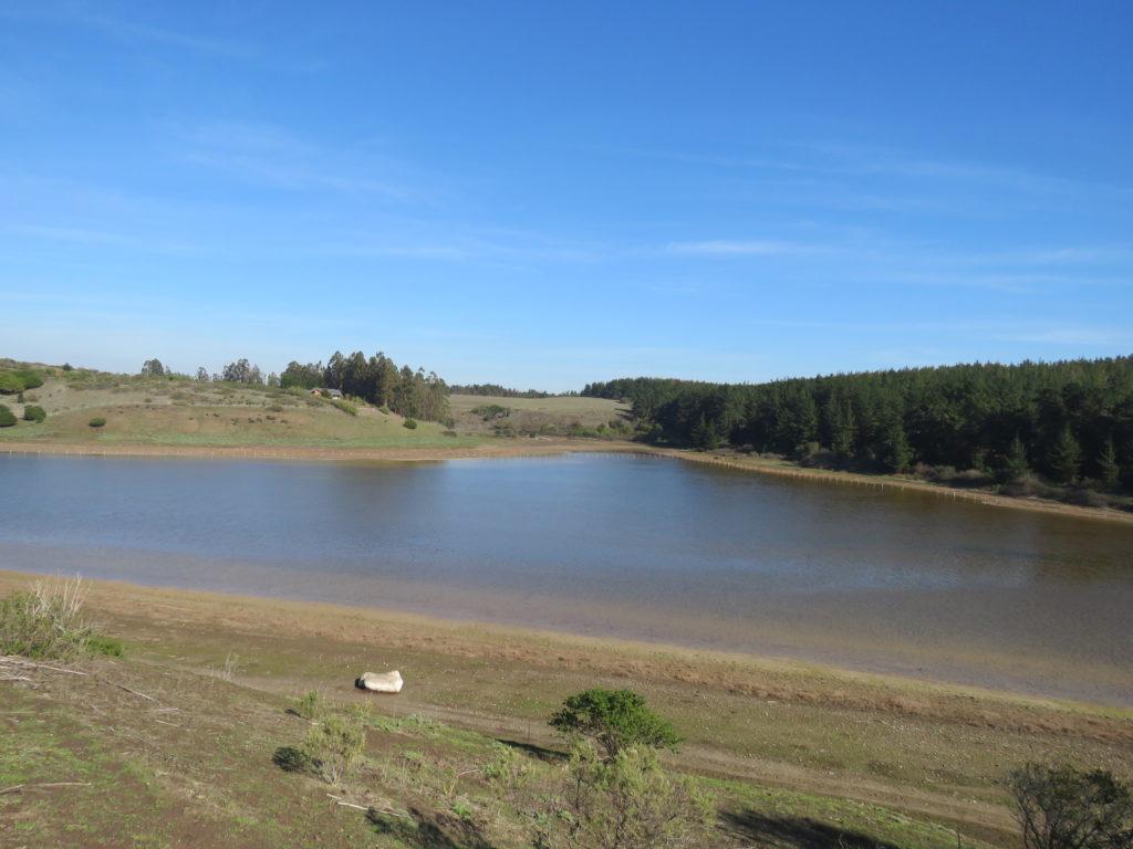 Laguna Colejuda | Conaf