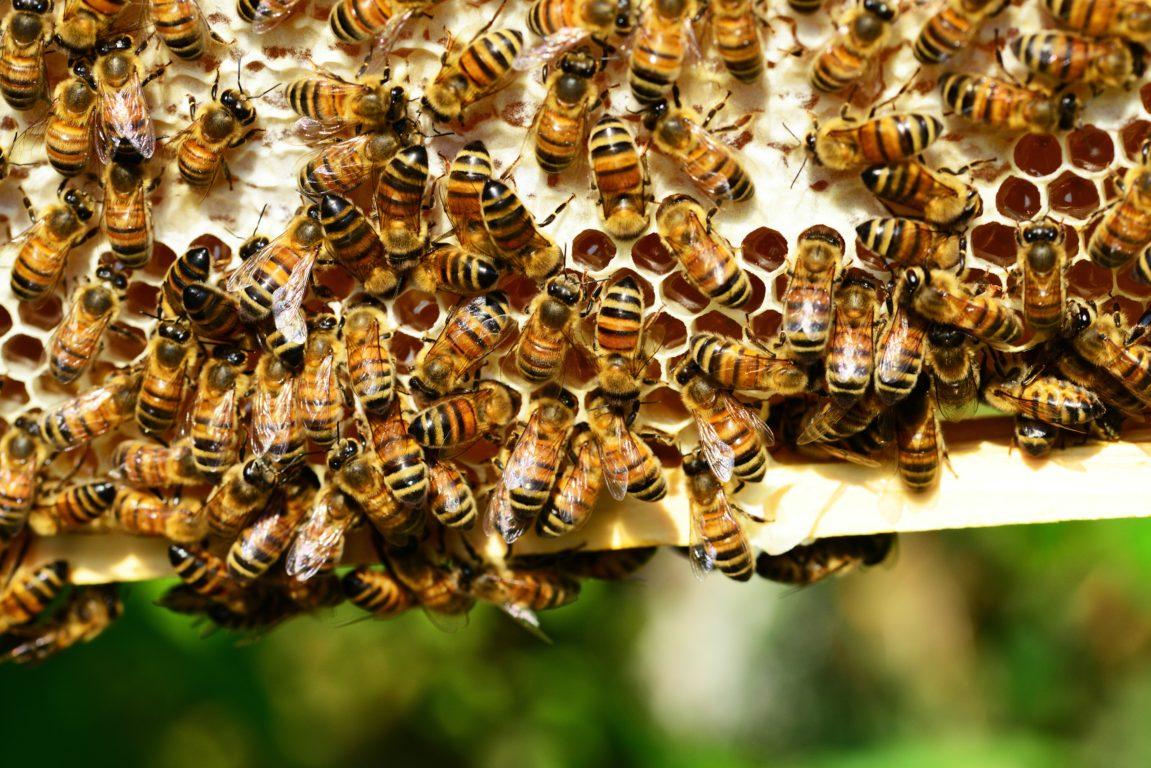 En el Día Nacional de la Miel: esta es su importancia y sus grandes beneficios para la salud
