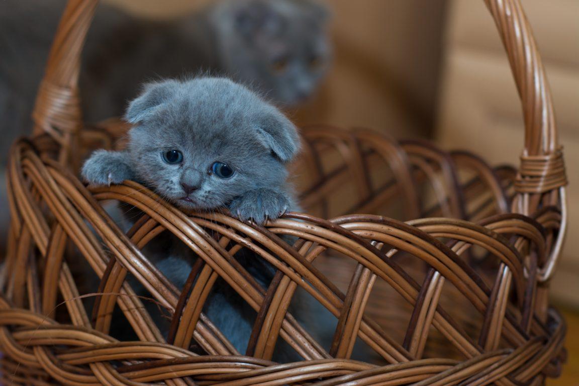 Un gato en casa: desde mejoras a la salud hasta ser más atractivo al sexo opuesto | Sociedad