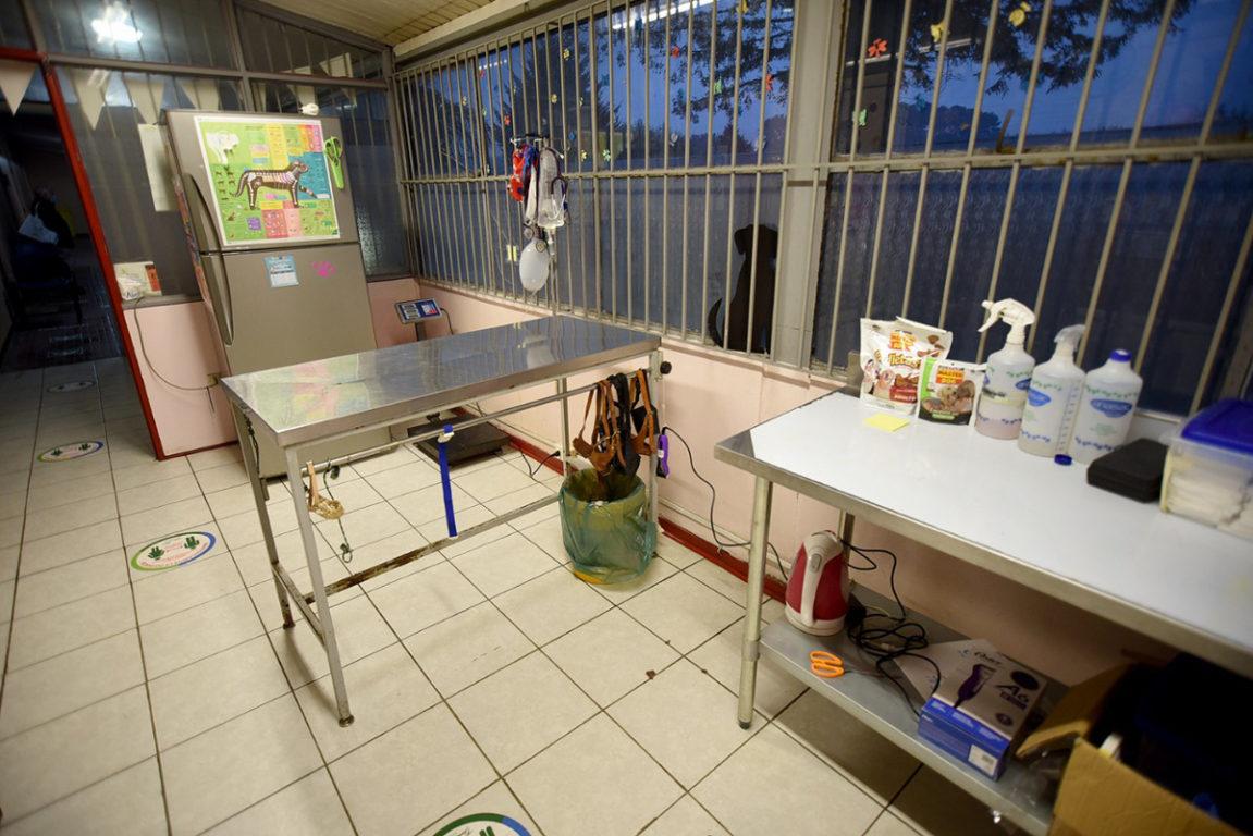 Inauguran clínica veterinaria municipal para mascotas de vecinos de escasos recursos en Temuco