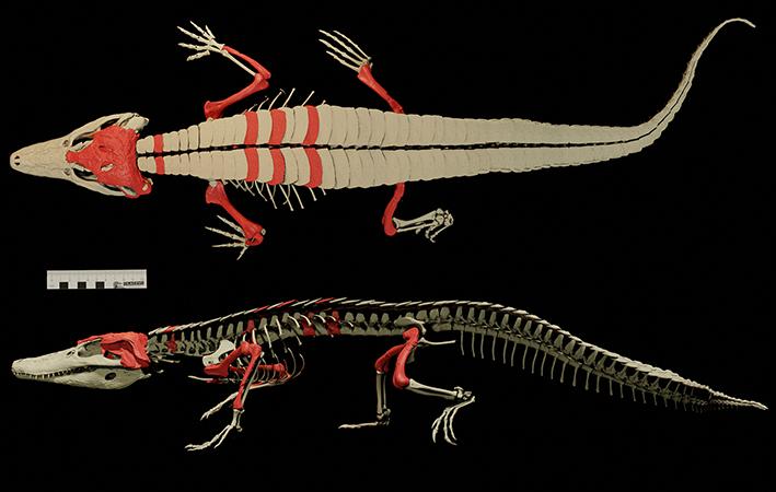 burkesuchus-mallingrandensis-precion-huesos-encontrados-expedicion