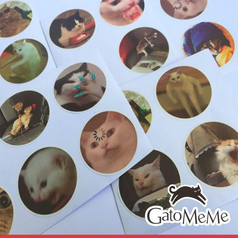 vino-gato-con-memes-de-gato