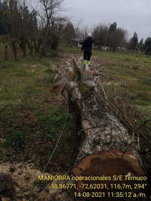 Tala de árbol provocó megacorte de electricidad en el sur de Chile
