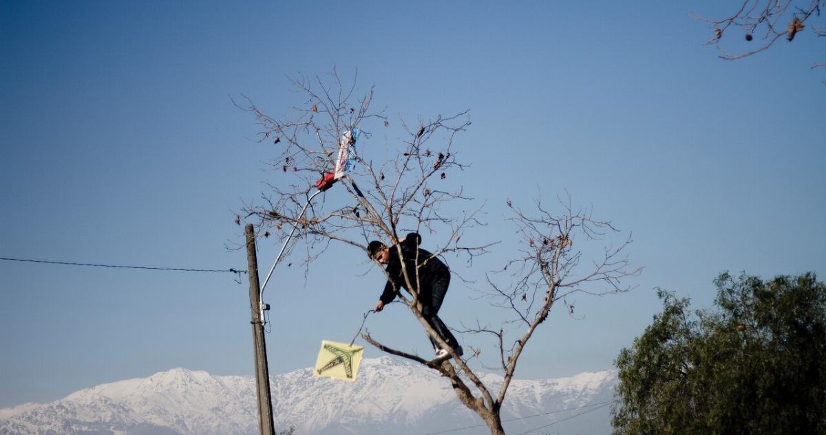 Niño trepa árbol para rescatar volantín